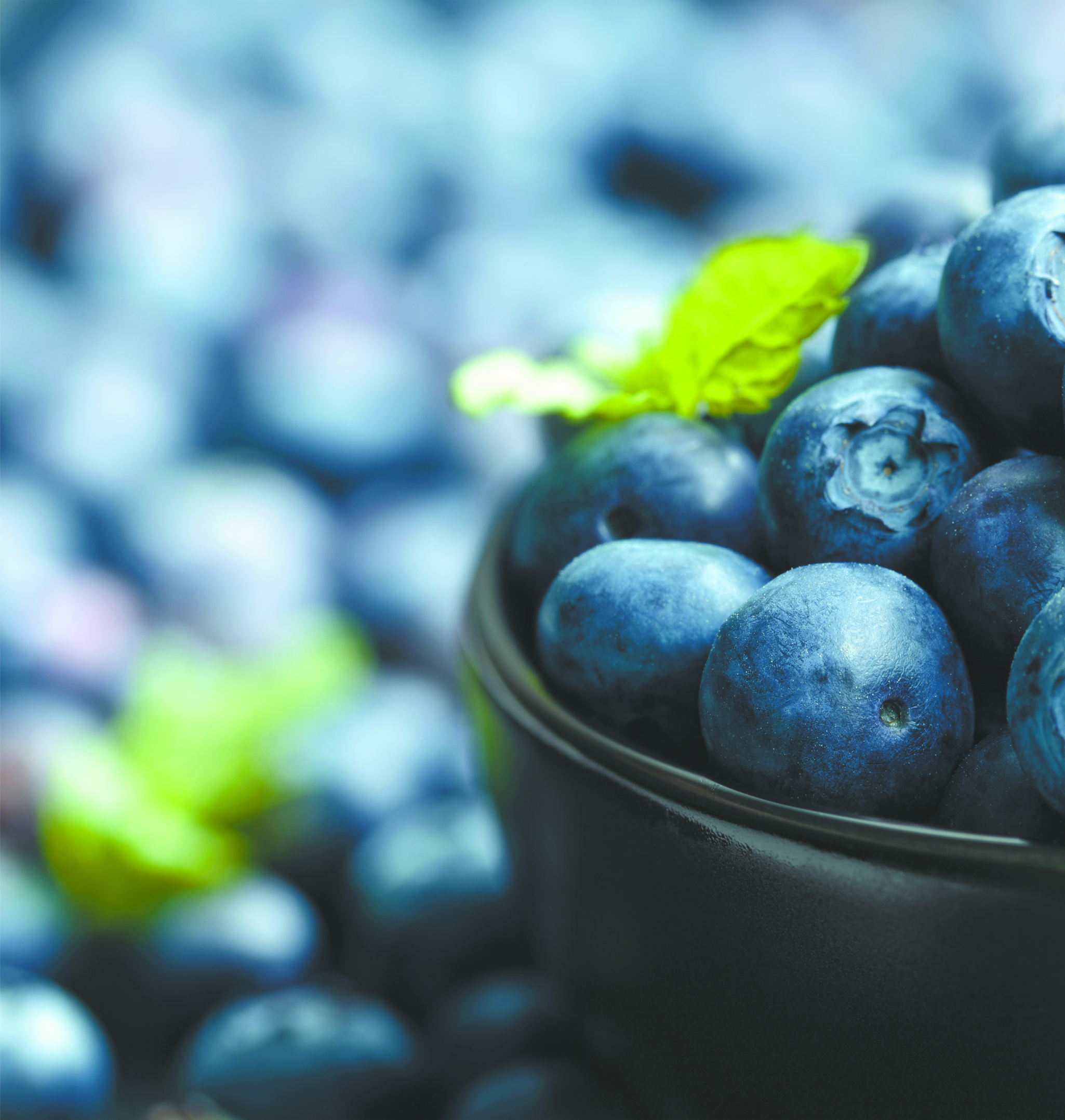 Blueberries Do a Body Good