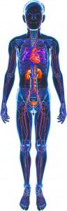 Vascular Health