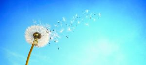 More Than Relief of Symptoms, a  Potential Cure For Airborne Allergies