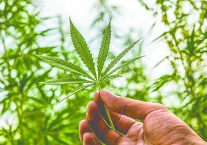 Medical Marijuana is a Viable Treatment Option