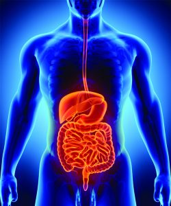 How Proper Digestion Affects  Your Overall Wellbeing