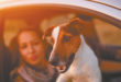 Tips for Safe Summer Travel with Pets