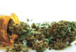 Medical Marijuana The Natural Alternative