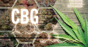You've Heard of CBD, But What About CBG?