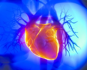 Why are Cardiac Stress Tests so Important