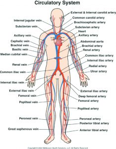 Arterial and Venous Circulation Dangers