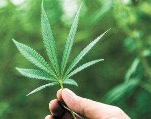 Contemplating Cannabis